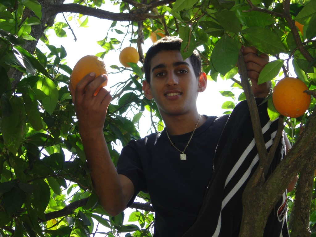 Table To Table - In the orange grove, gleaning for the hungry - t2t-photo.jpg